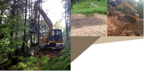 lavori-forestali-e-bonifiche